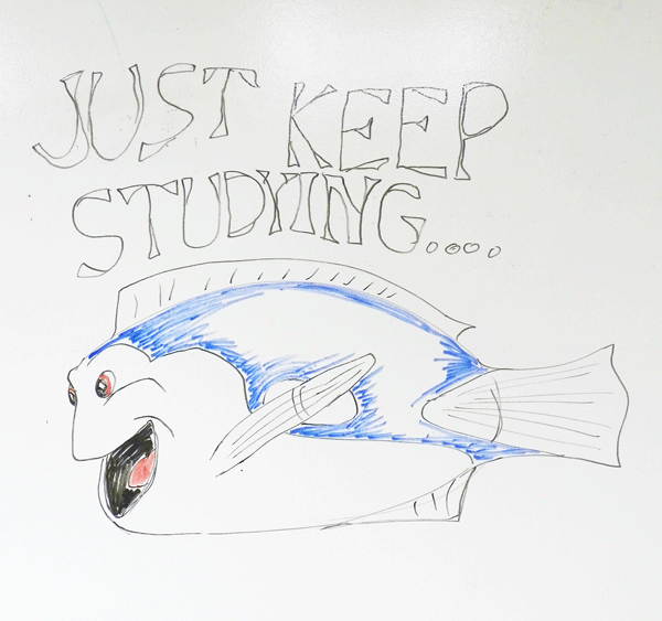 Dory drawing on UCA whiteboard